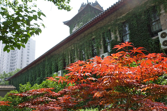 5 Things to do in Nanjing