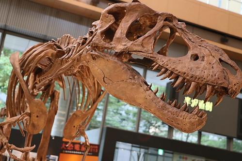 Gorgosaurus libratus