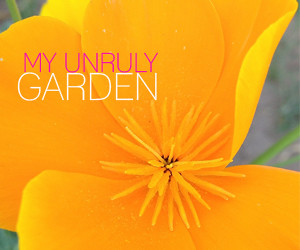 my unruly garden