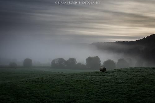 norway fog sheep sau sigma bergen hordaland 2012 tåke a77 haugland gaupås