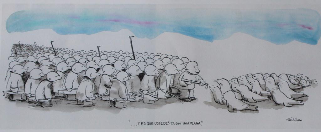 Sobre la leyenda ''es que ustedes son una plaga' multitud de cazadores amenazan a unas pocas focas