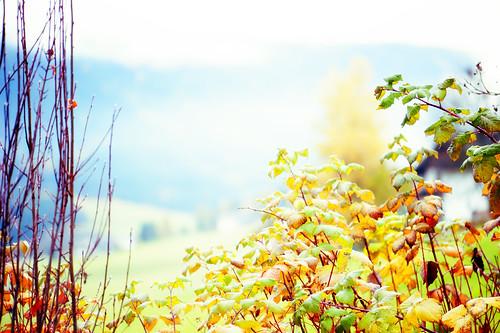 di foglie ed erbe che risplendono, lucenti si fanno acqua, si fanno aria, volano via.