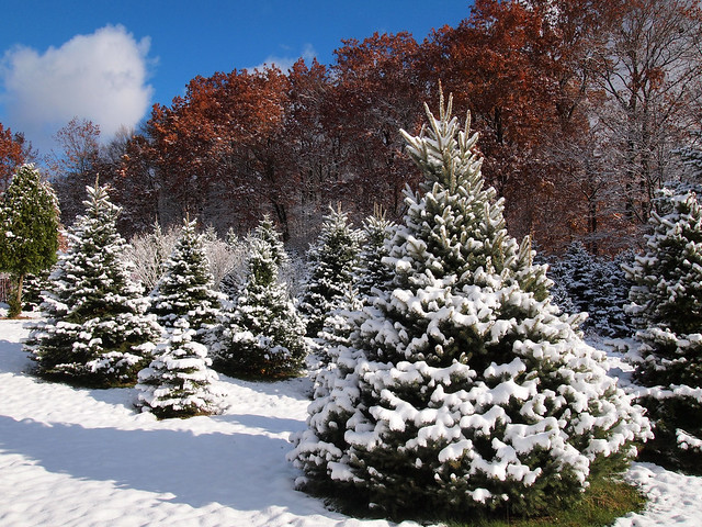 Our Prices Paradise Hill Christmas Tree Farm