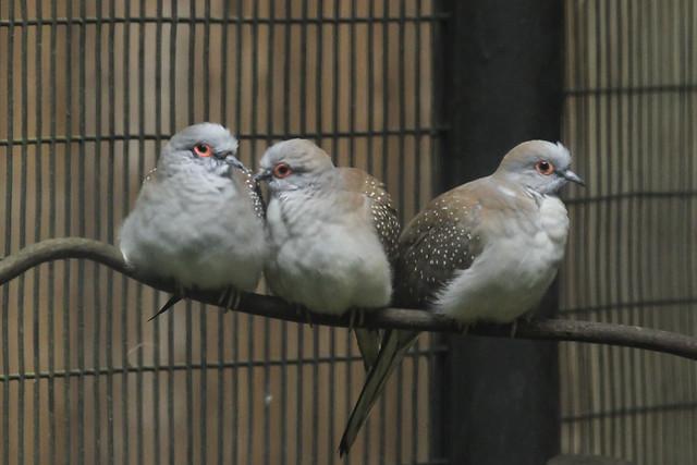 Jurong Bird Park-74