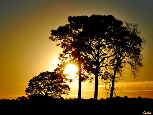 sun tree sol arbol atardecer afternoon sunrises flickrheartgroup