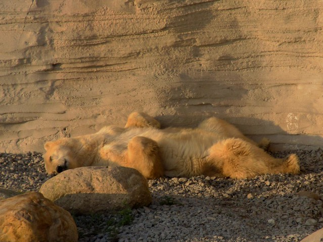 sunny polarbear Irka
