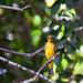 Birds2 por Alex_Herrera