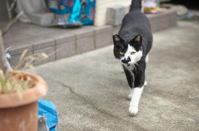 東京路地裏散歩 荒川編 ネコ 2014年2月27日