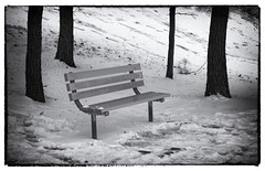 Park Bench_MG_9186