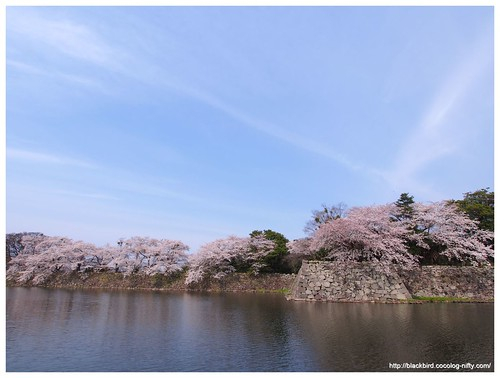 Cherry blossoms 20140407 #04