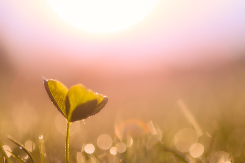 park light sun flower color macro nature look field grass sunrise canon germany munich münchen bayern deutschland bavaria photography colours dof bokeh depthoffield westpark makro tones pastell 6d
