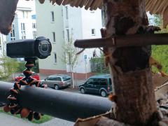 Vögel mit Actioncam beobachten