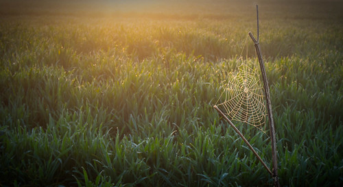 sunrise spring flickr spiderweb olympus cobweb april omd lightroom hants m43 1250mm em5 500px lr4 microfourthirds mzuiko