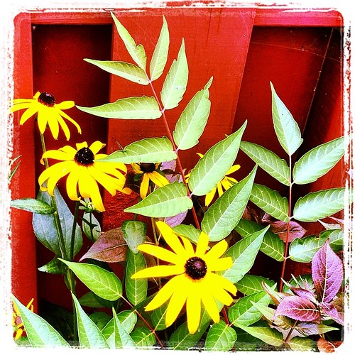 #fmsphotoaday May 10 - In the garden (from the archives, since our yard is currently a mess of weeds!)