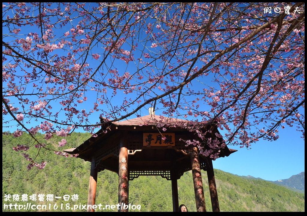 武陵農場賞櫻一日遊DSC_5573