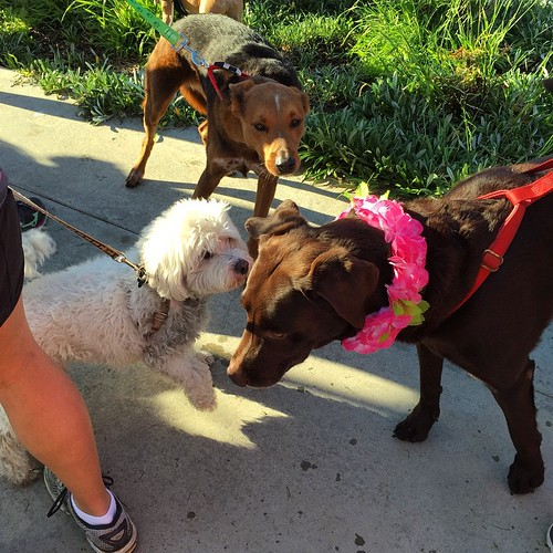 Good times! Canine chaos at the starting line. #PawsFurPink | by queenkv