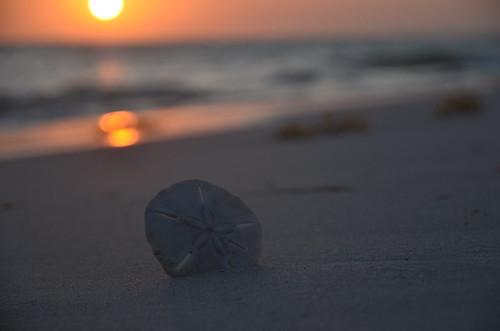sunset sea beach clouds strand island meer sonnenuntergang sundown martinique wolken insel caribbean sanddollar strandgut karibik seeigel pansyshell clypeasteroida seaurgin seacookie snapperbiscuit