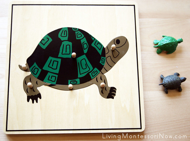 Naming Parts of a Turtle with the Montessori Turtle Puzzle and Safari Ltd Turtles