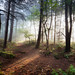 Pinewoods morning by J C Mills Photography