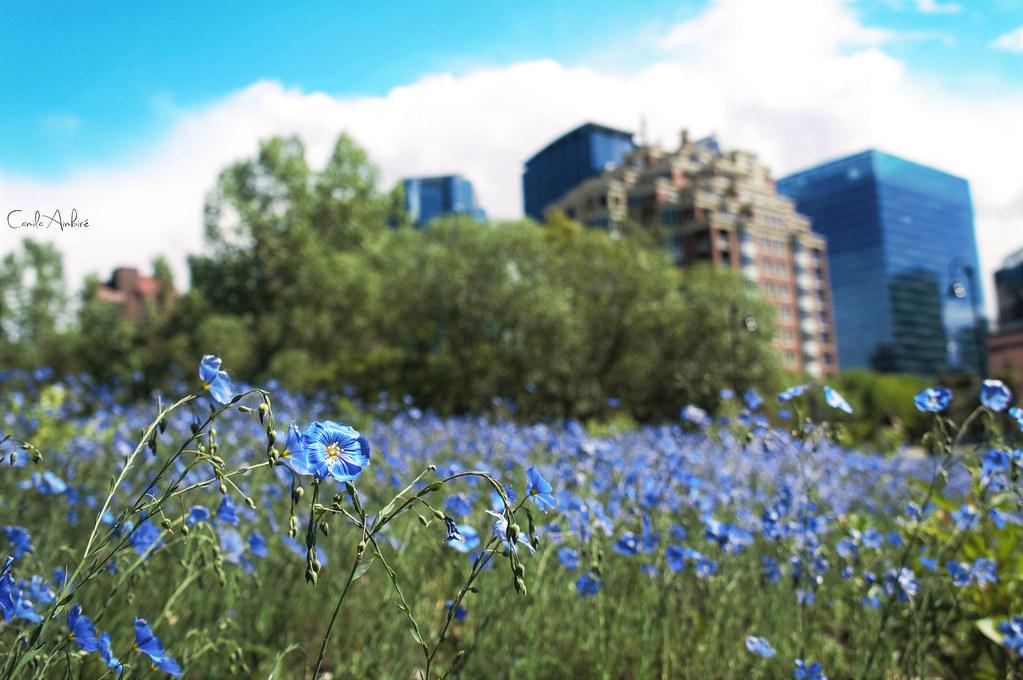 le fleurs et la ville