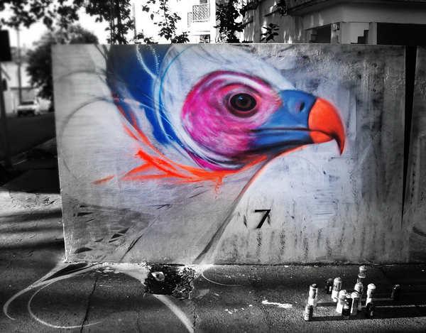 graffiti aves