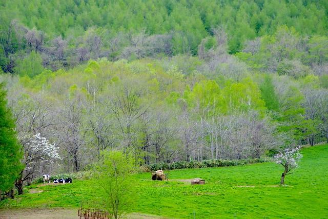 春の牛 ひねもす のたりのたりかな