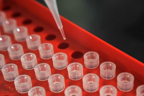 Pipetting in ILRI's biosciences laboratories