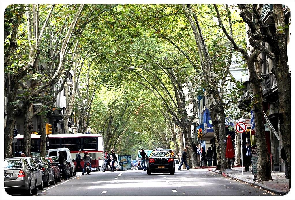 tree-lined street montevideo Uruguay