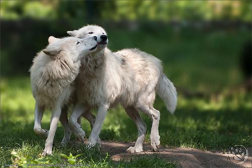 True Affection by wolfenwinter