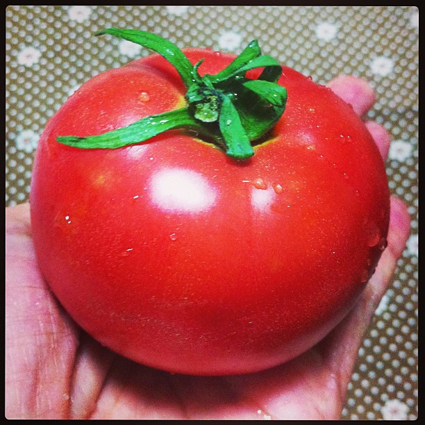 Gorgeous tomato from mom's garden:) #mymomisgreat