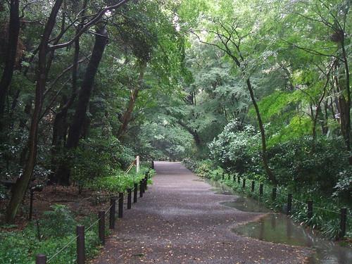 国立科学博物館附属自然教育園 豪雨の後の森
