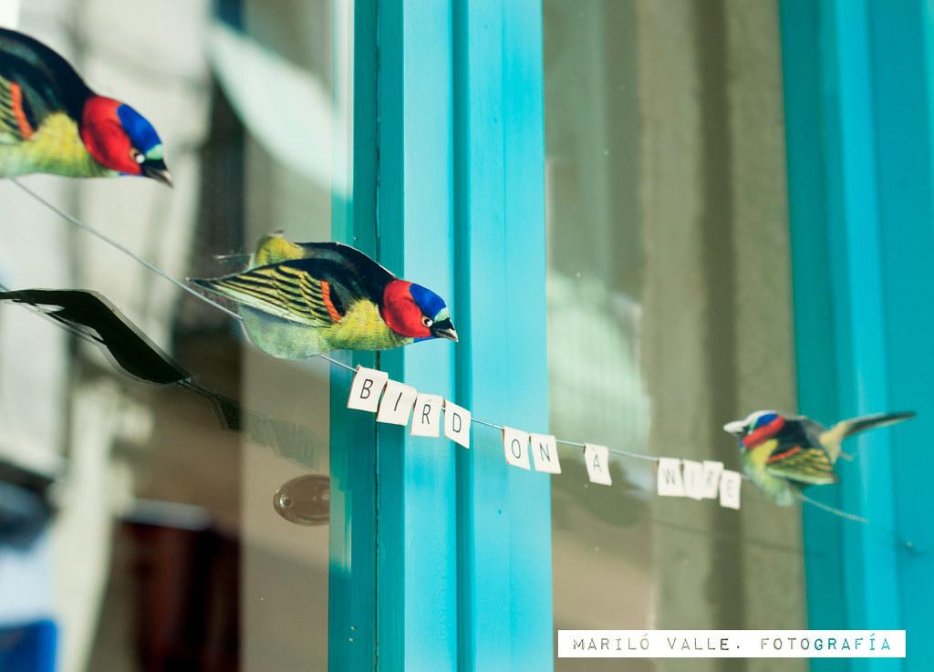 qué fácil es tener pájaros en la ventana