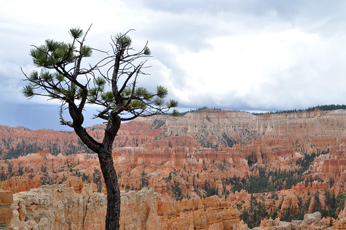 Bryce Canyon #3