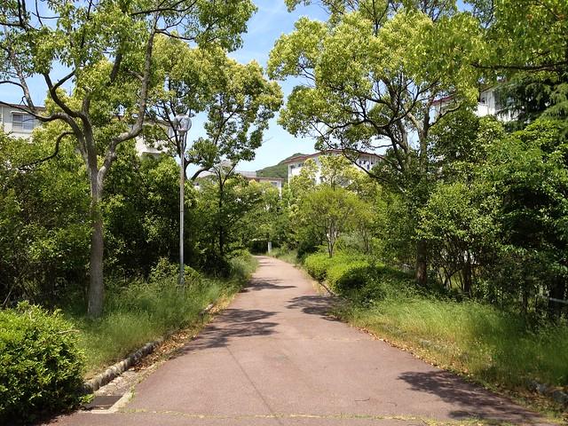 20130526六甲山歩Course4鉢伏山~須磨アルプス 024