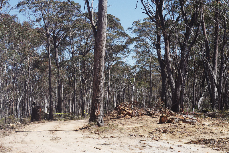 Forest destruction for mining operation