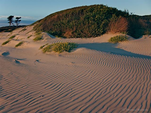 Beach, Dunes near Coastal Terrace Plains