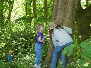 John Muir Award: Outdoor activity Meet a tree