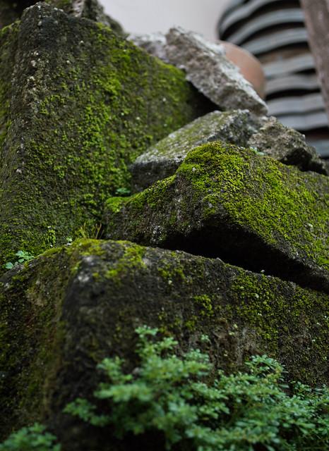 Low Angle Shot - Backyard Greens