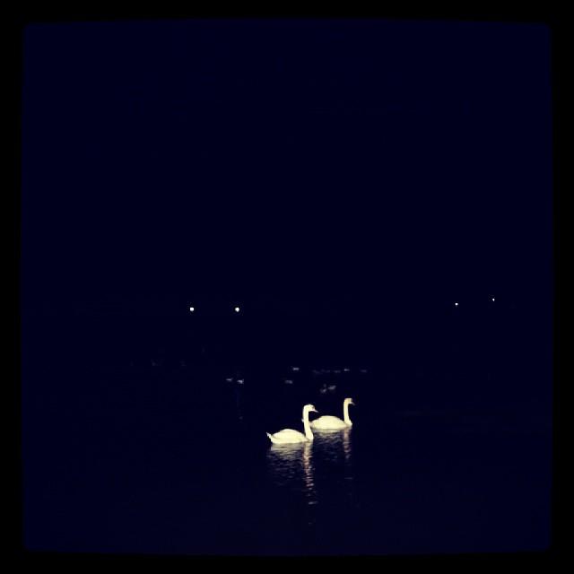Finir la soirée en compagnie de 2 beaux cygnes.  ♥♡♥