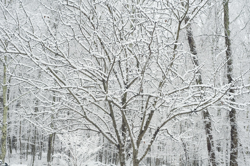 131210_snowwoodshp_011