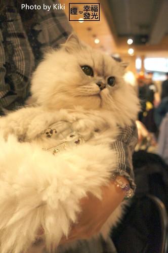 cat_5th (43)