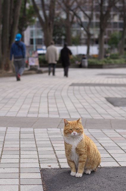 東京路地裏散歩 上野・谷中 2014年2月6日