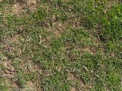 Grass_green-dirtpatches-sticks_medium.jpg