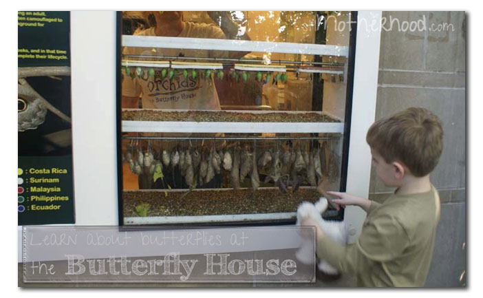 learn about butterflies at St. Louis Butterfly House