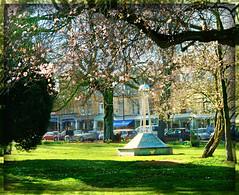 Montpellier gardens in blossom