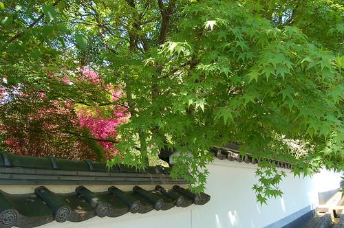 慈雲寺の楓