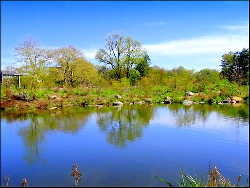newyork brooklyn spring prospectpark dmitriyfomenko spring62014