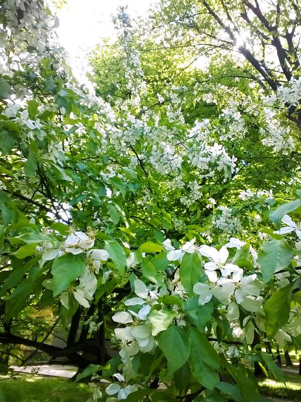 Street flowers. Lviv, Ukraine
