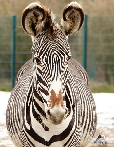 Tierpark Berlin 24.01.2015 133