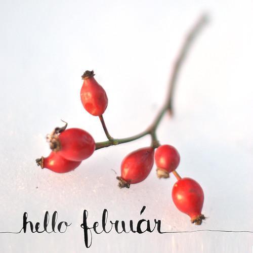 hello_februar2015